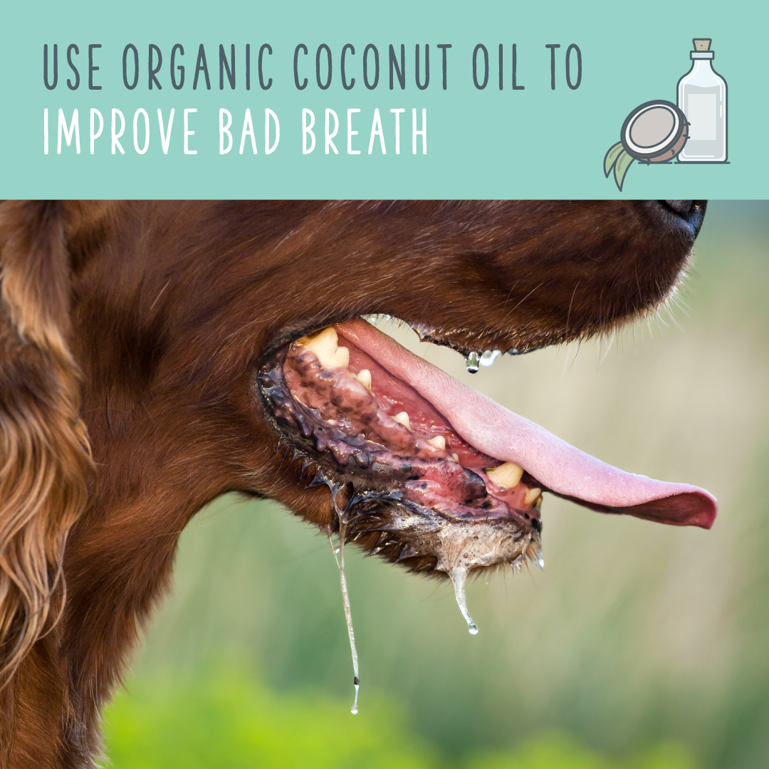 coconut oil for dogs bad breath