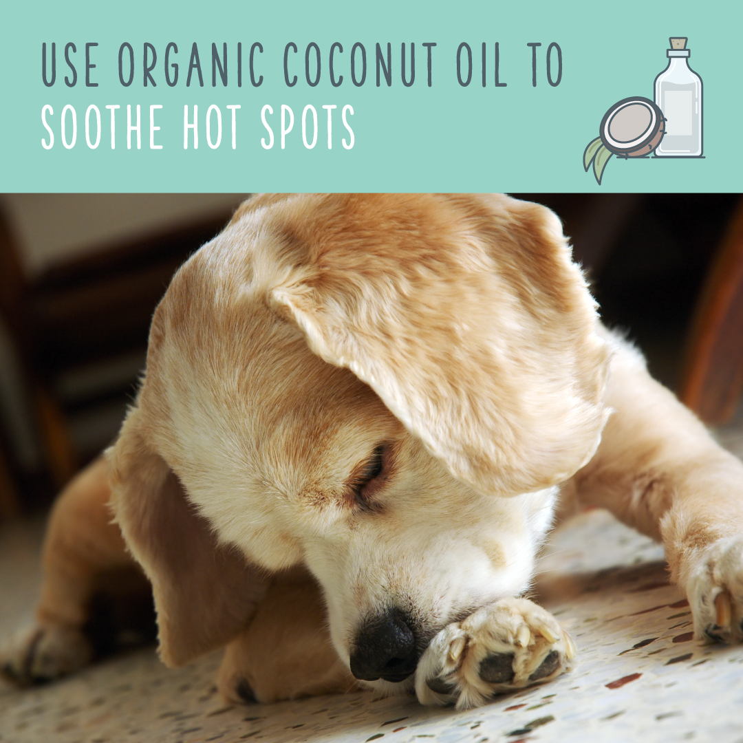 coconut oil for dogs itchy hot spots