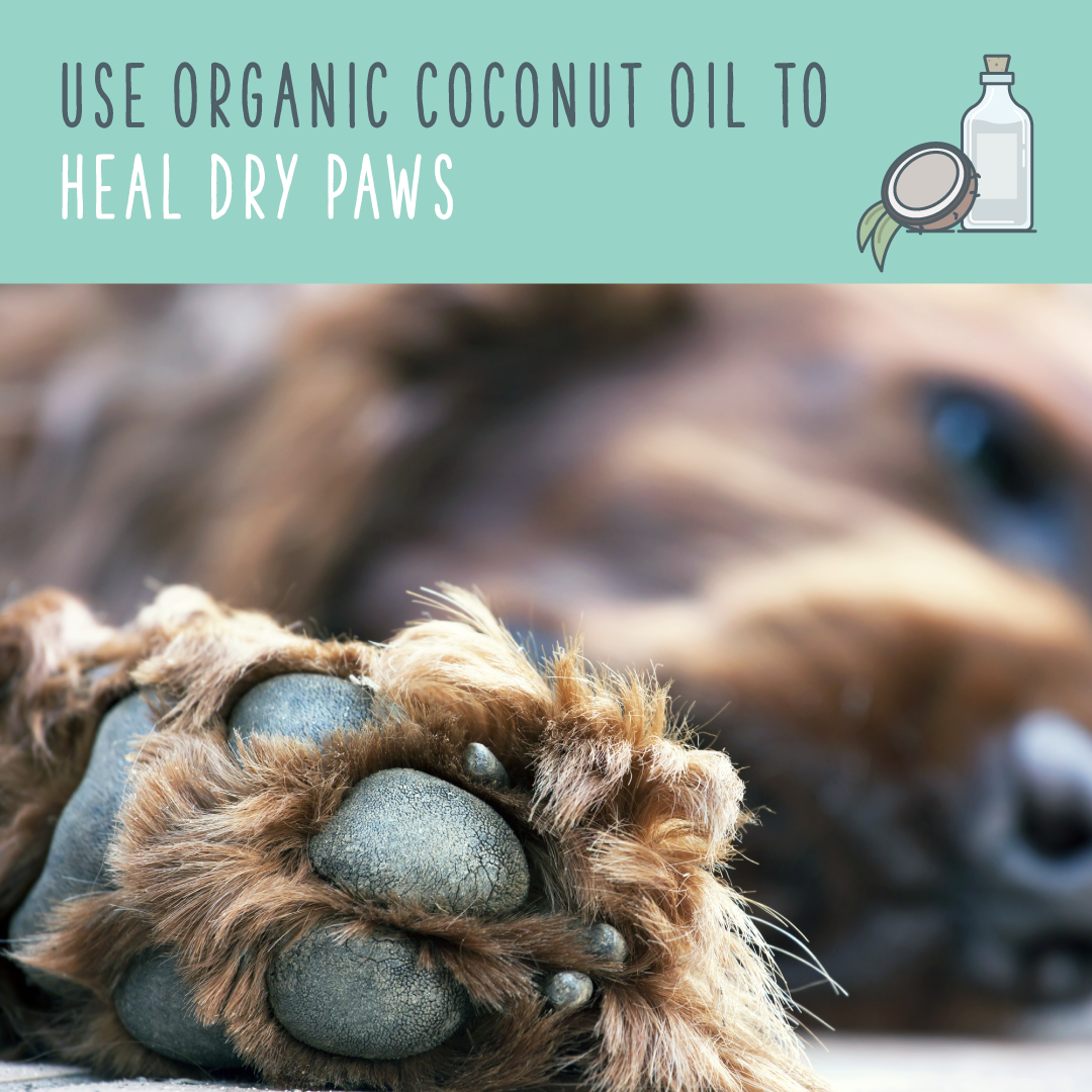 use coconut oil to heal dry paws