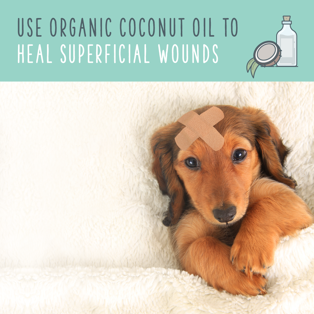 coconut oil for healing superficial wounds