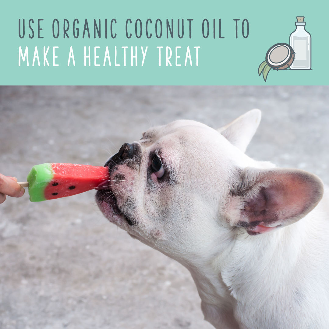 coconut oil recipe for dog treats