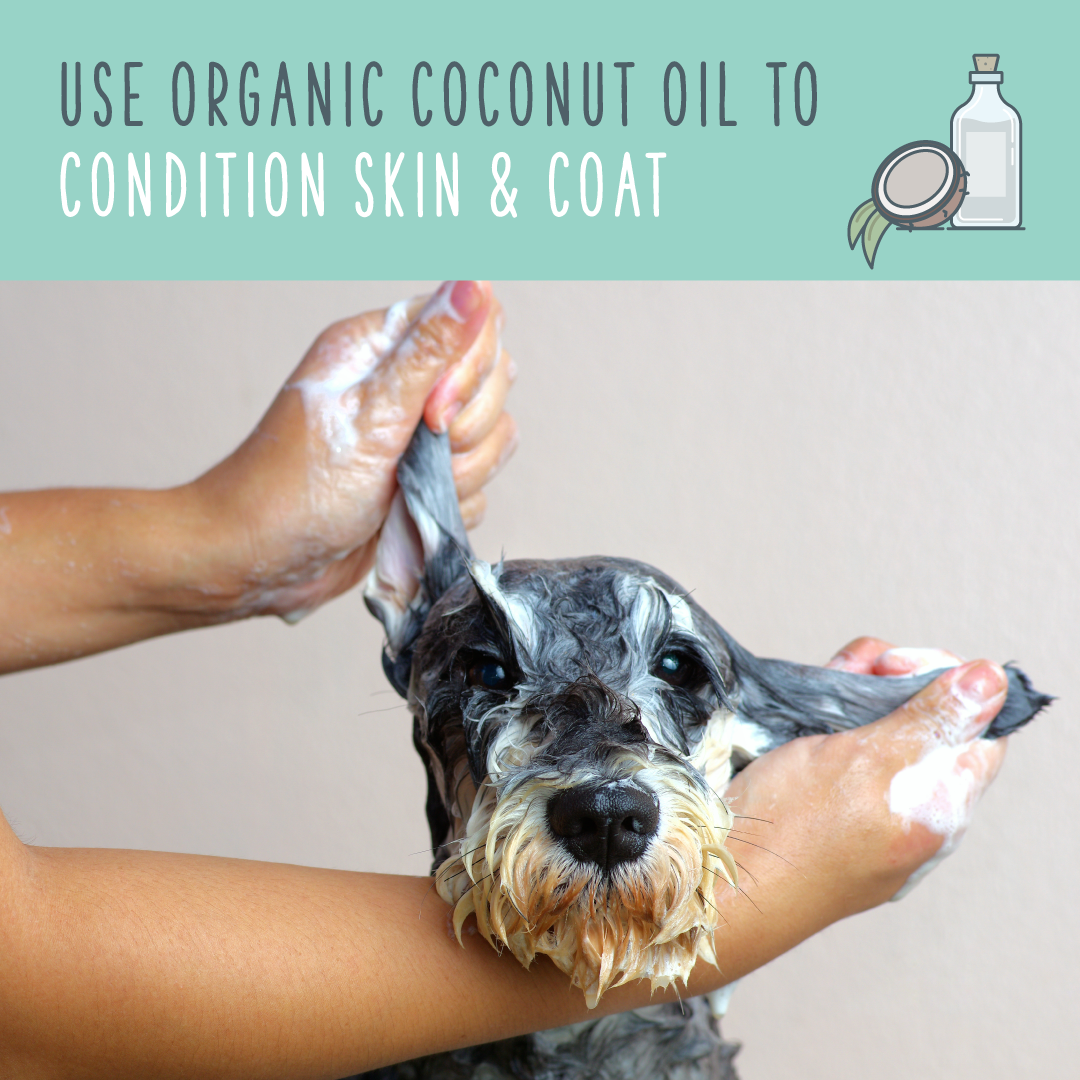 coconut oil for dogs coat and skin