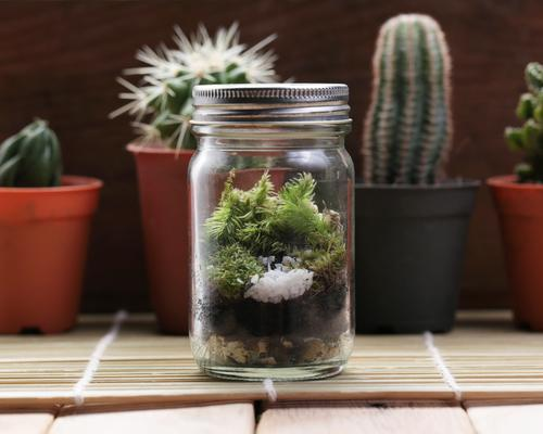 Closed terrarium in front of cacti