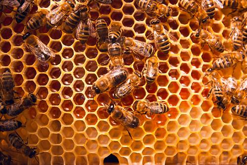 Honeys on honeycomb: what is raw honey?