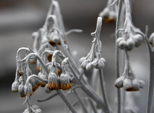 Flowers dying in winter