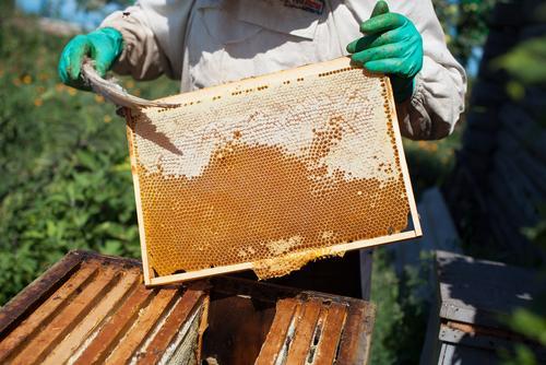 Beekeeper with raw honey