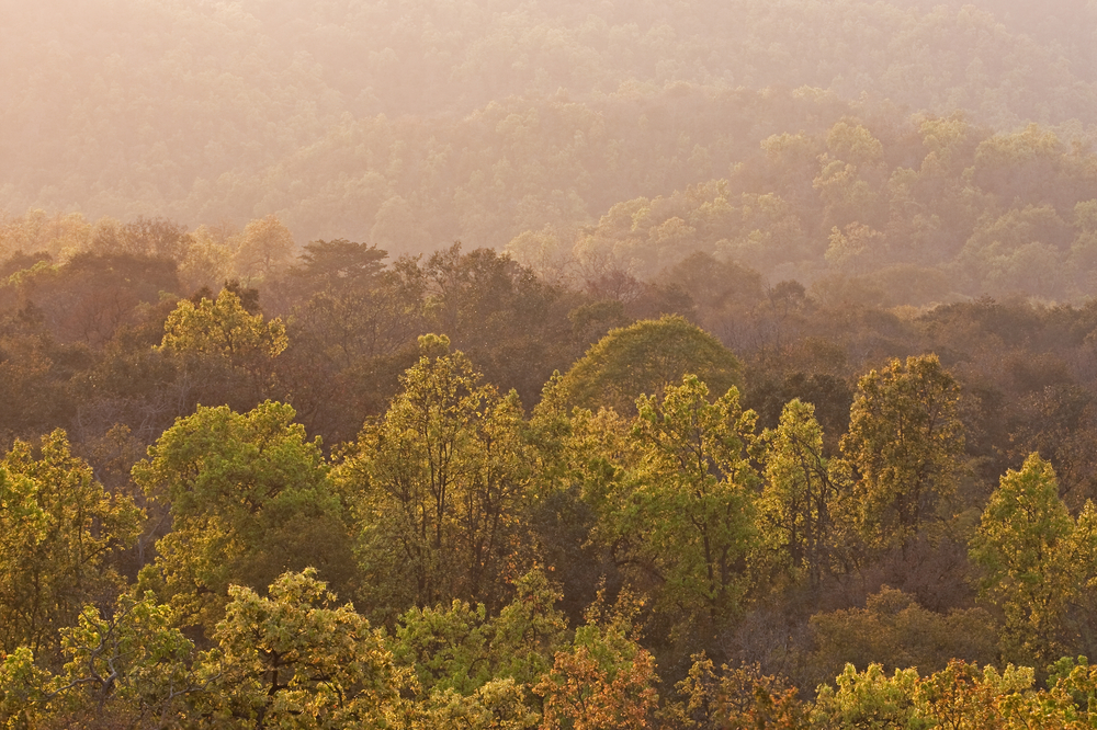 Sustainability and reforestation go hand-in-hand.