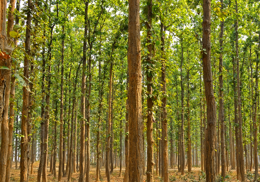Reforestation efforts in India