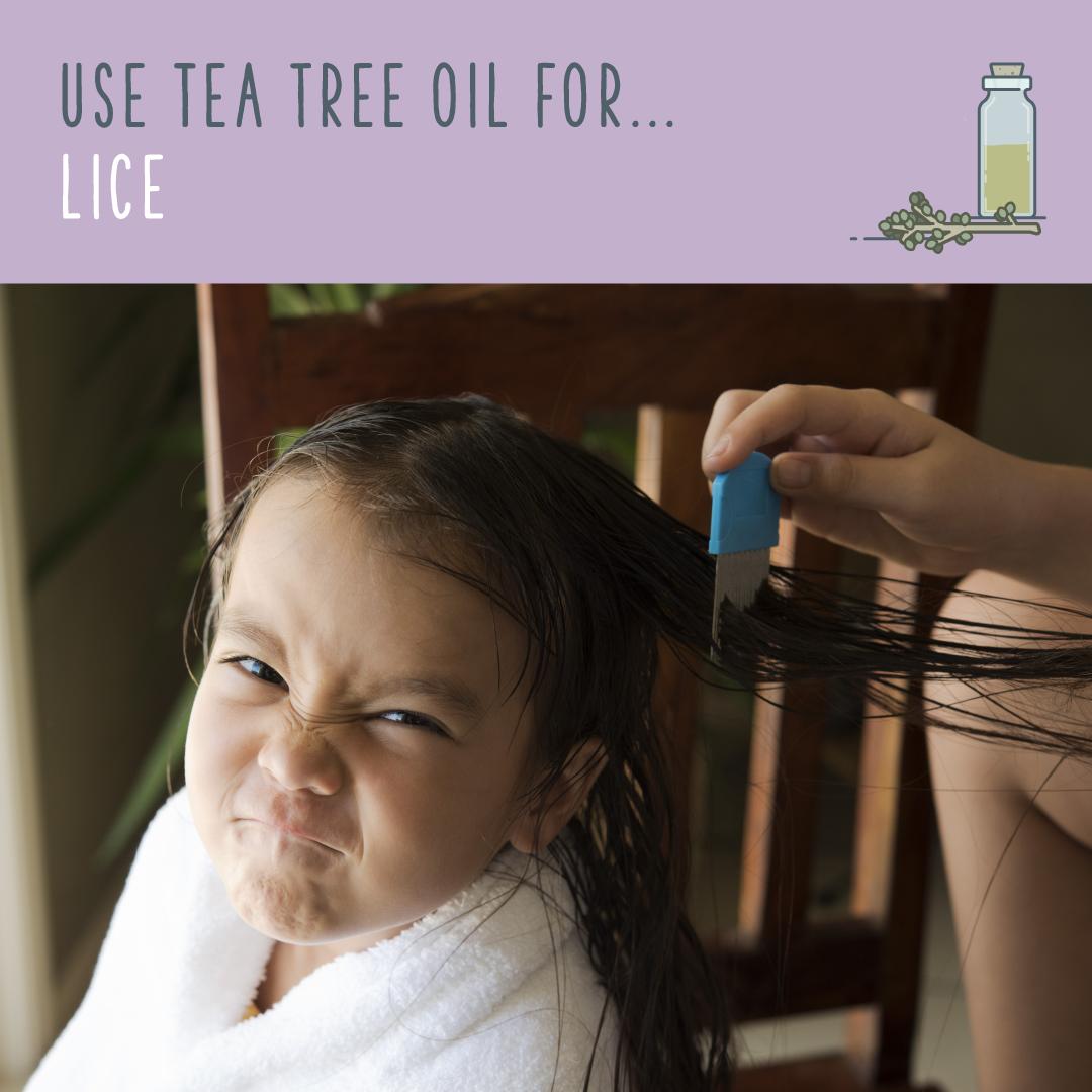 tea tree oil over 70 mind boggling uses for tea tree oil. Black Bedroom Furniture Sets. Home Design Ideas