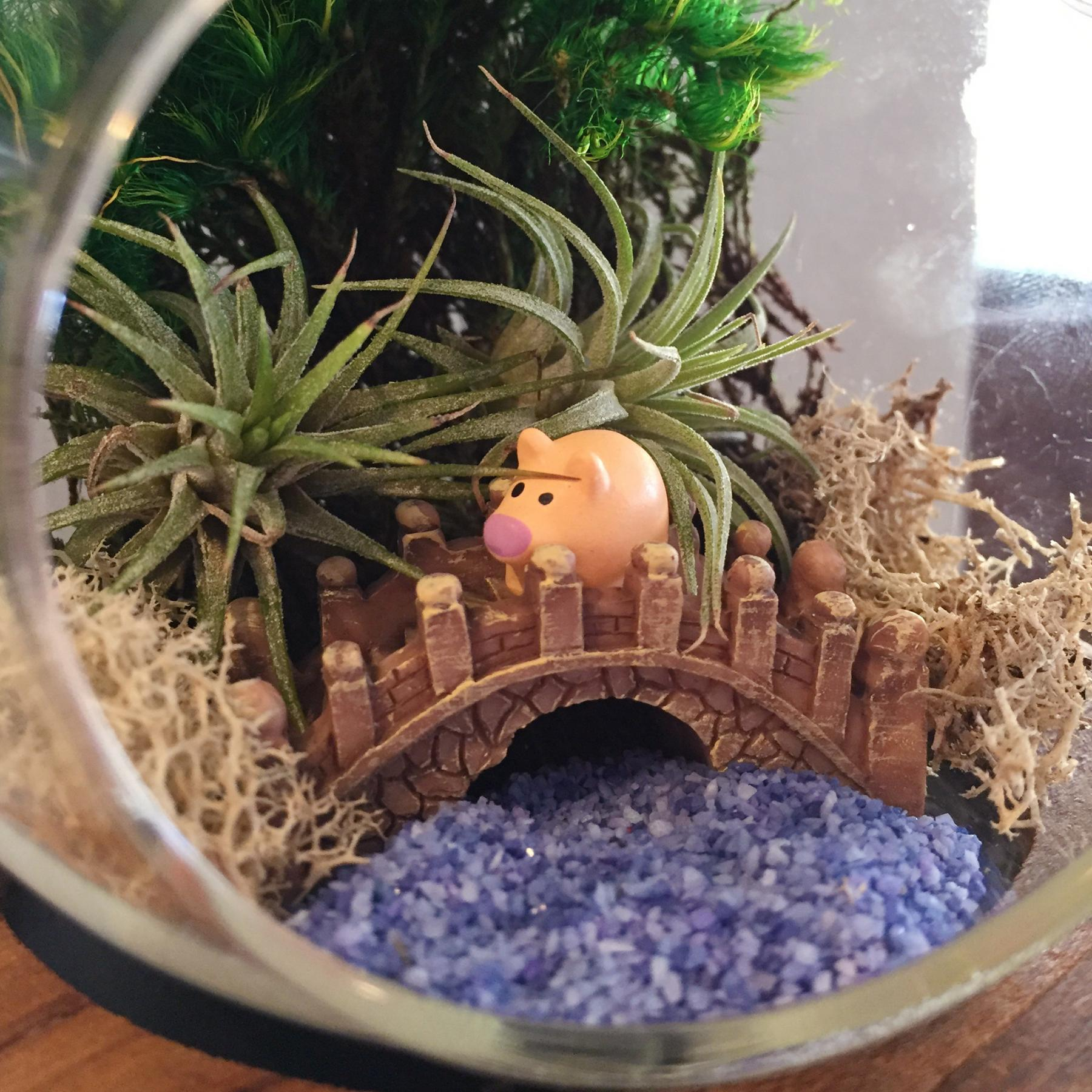 Your succulent terrarium could be a miniature paradise