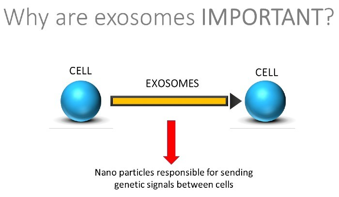 exosomes hair regrowth