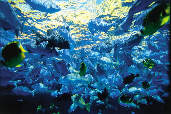 Snorkeling at molokini crater maui for Molokai fish and dive