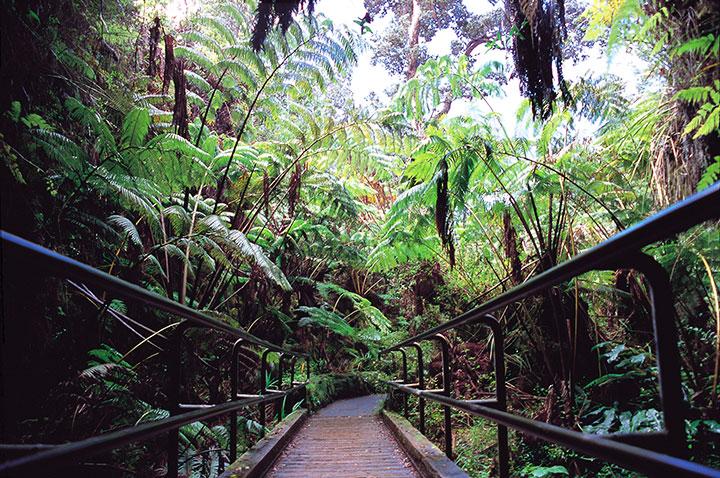 Hawaii Volcanoes National Park on Big Island   Hawaii.com