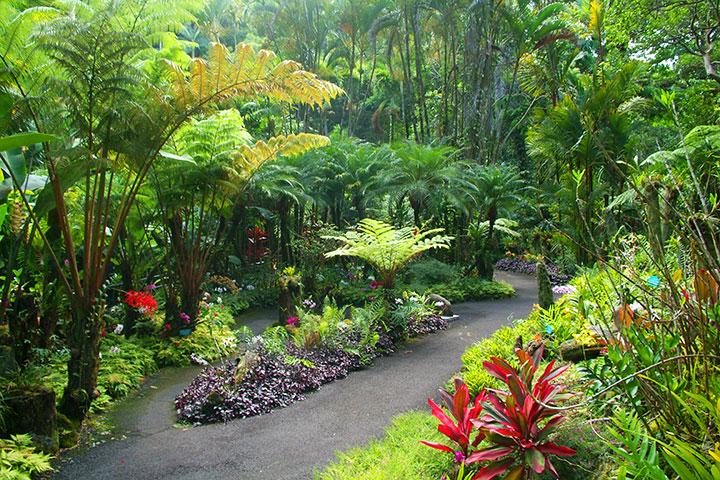 Hawaii Tropical Botanical Gardens.