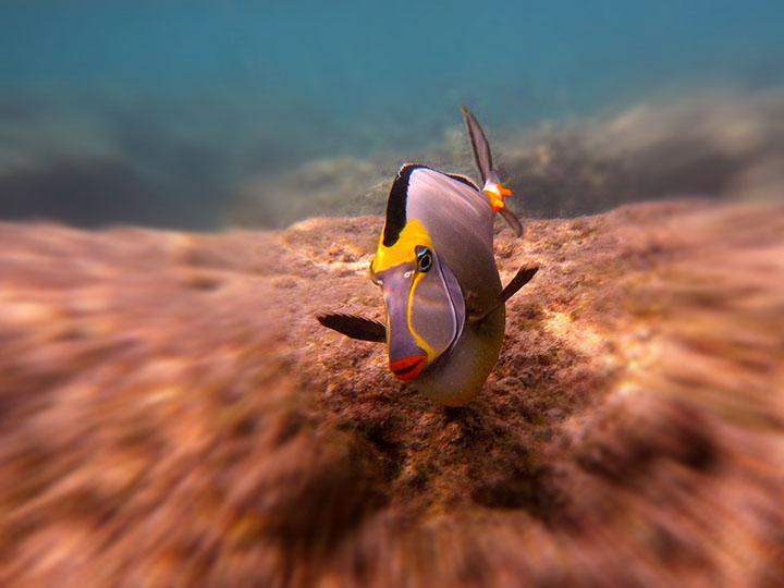hanauma bay snorkeling hawaii