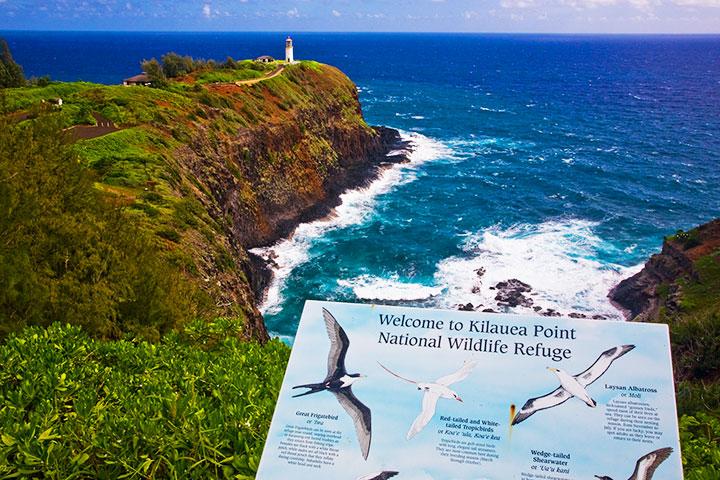 Kilauea Wildlife Sanctuary.  Photo courtesy of  Hawaii Tourism Authority (HTA) / Tor Johnson.