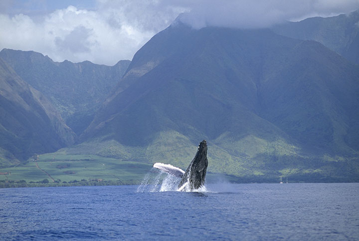 Photo courtesy of Hawaii Tourism Authority (HTA) / Tor Johnson.