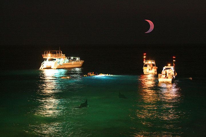 Night Dive with Manta Ray
