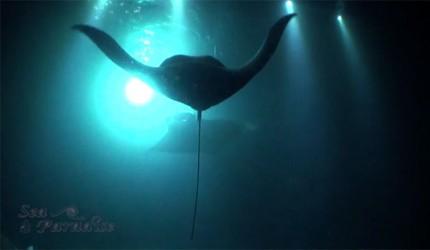 Sea Paradise Manta Shot