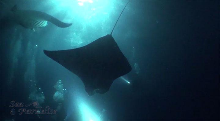 Sea Paradise Manta Shot 3
