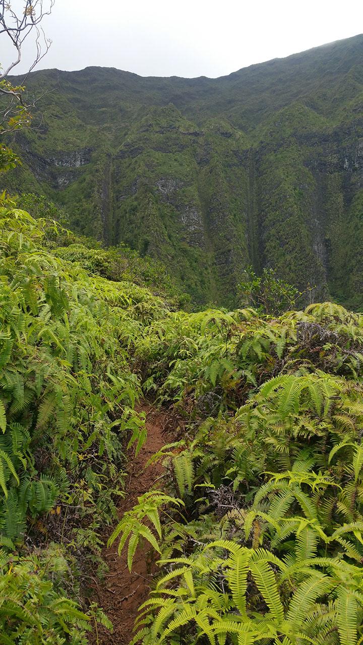 hiking maunawili trail