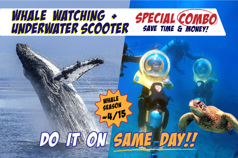 Whale Watching & Underwater Scooter