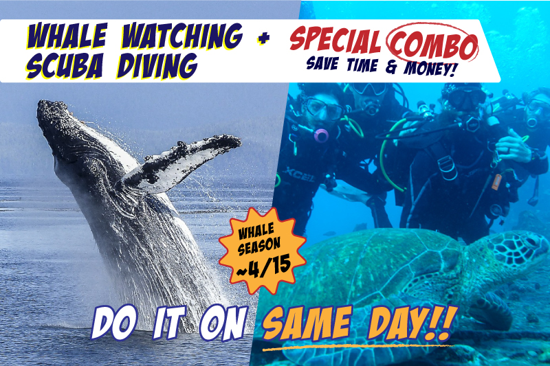 Whale Watching & One-Tank Scuba Diving