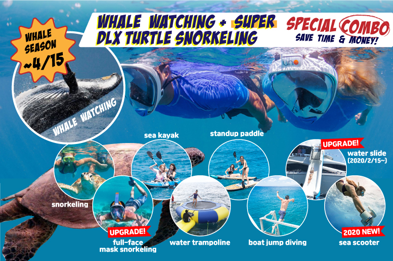 Whale Watching & Super Deluxe Turtle Snorkeling