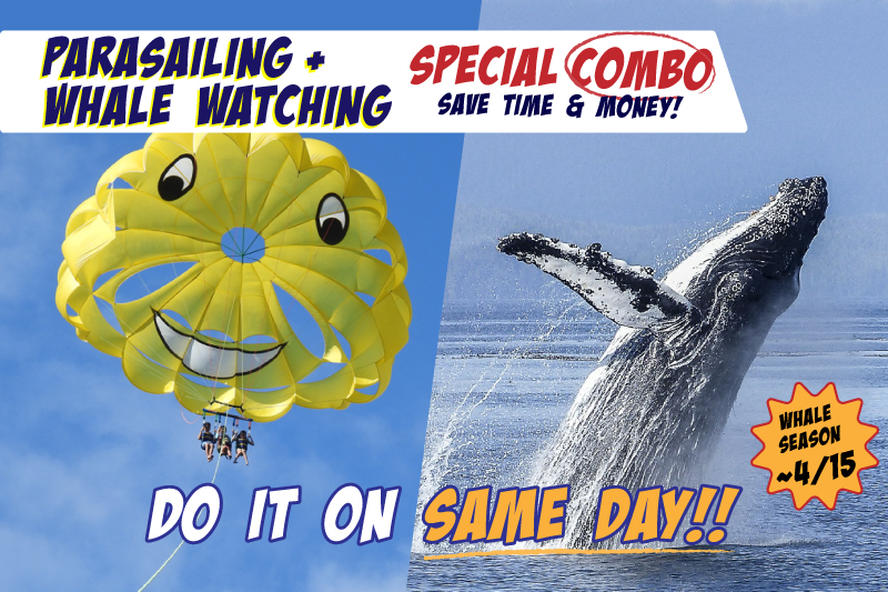 Whale Watching & Parasailing