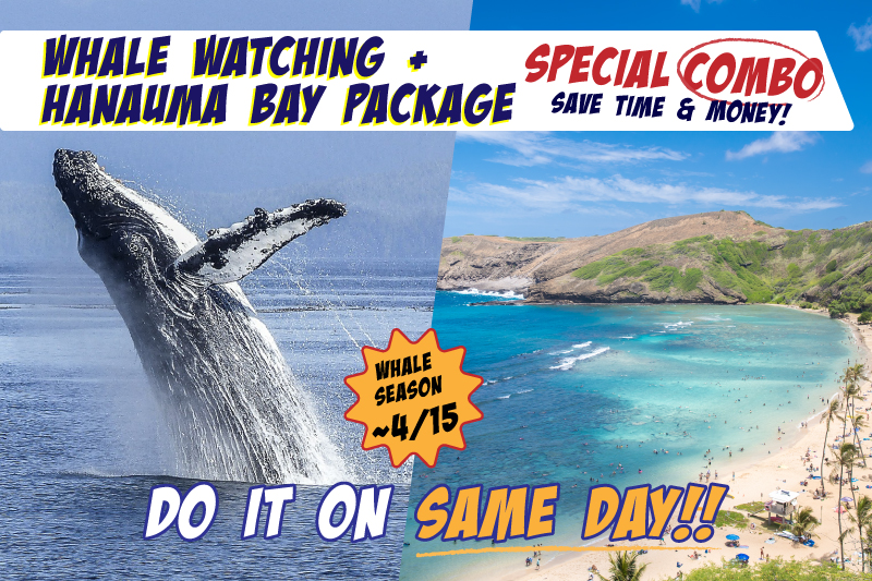 Whale Watching & Hanauma Bay