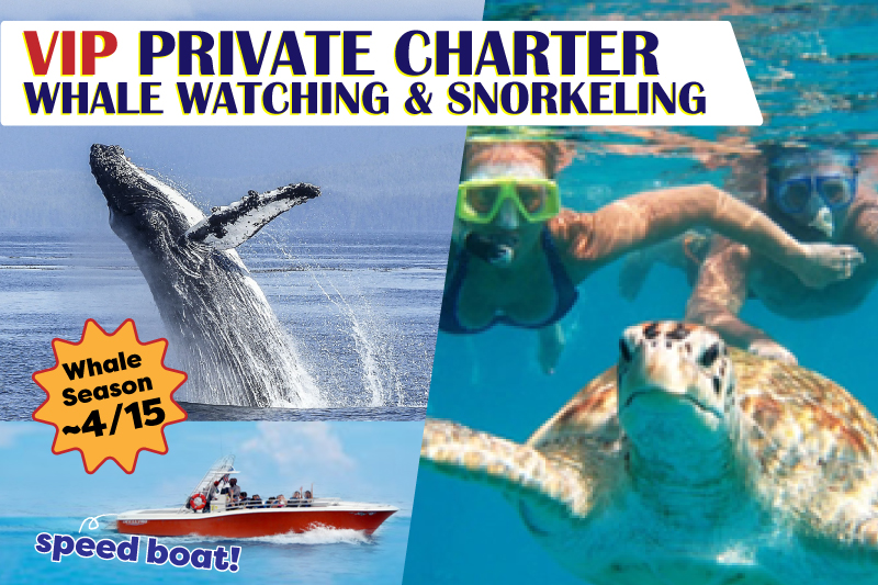 Whale Watching & Snorkeling Charter