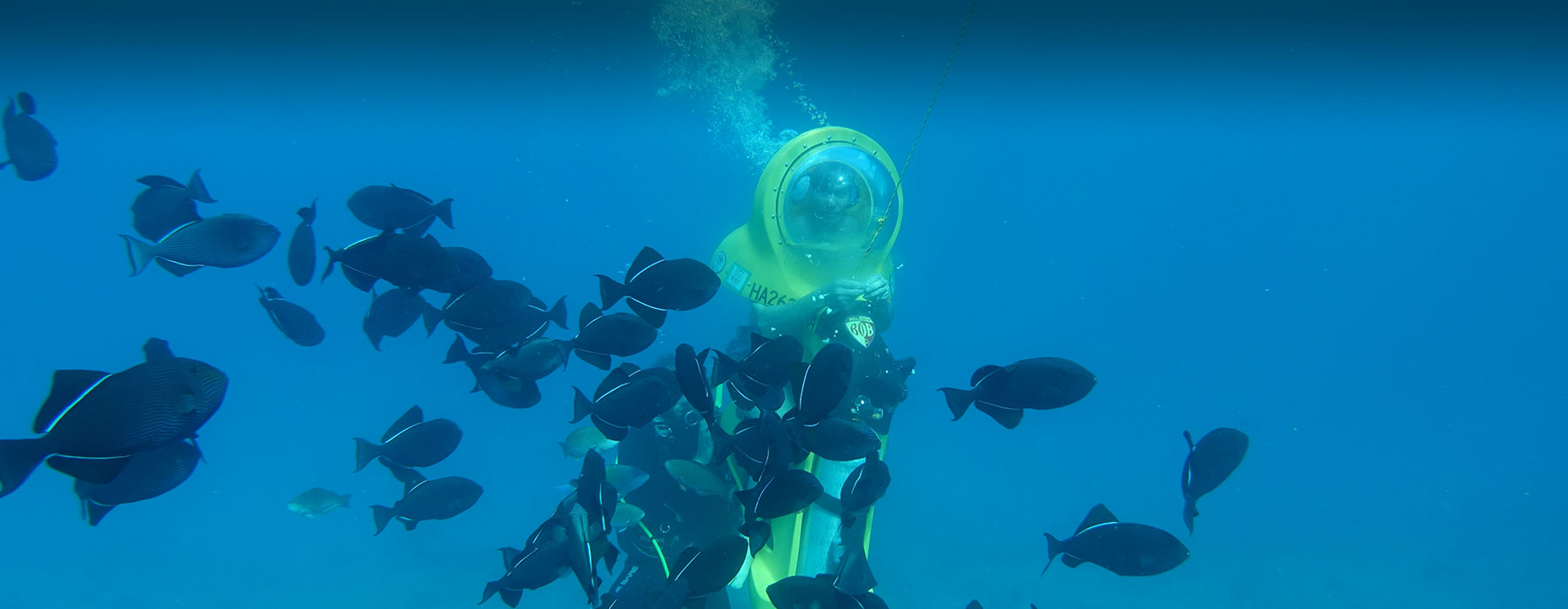 Discover Hawaii's underwater world