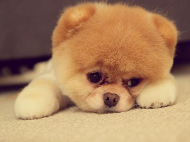 Malnutrition cute dog