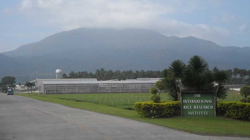 Entrance to the IRRI Headquaters