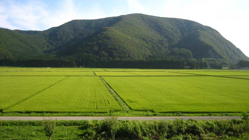 Rice Paddies near Lake Inawashiro in Fukushima Prefecture, Japan