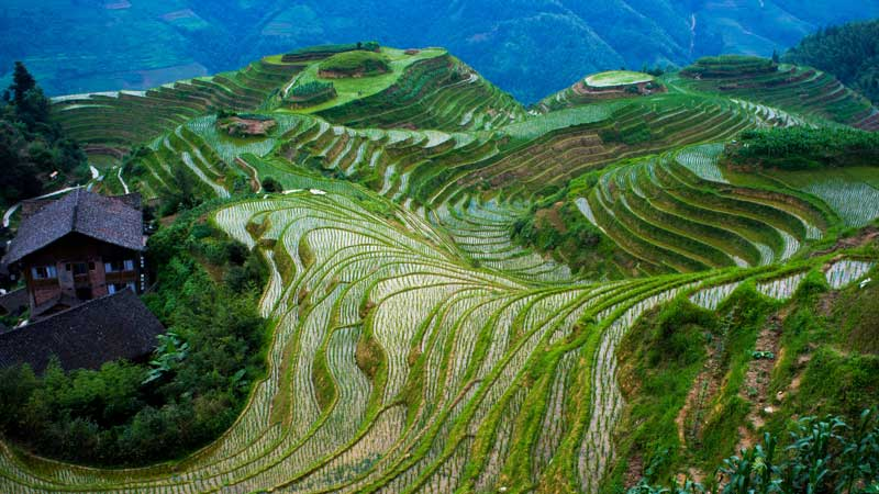 Longsheng Rice Terrace in China