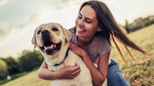 CBD Oils for Pets - How Can it Help?