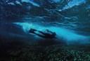 Title: Reef Snorkler Location: Australia Photo Of: stock Type: Underwater