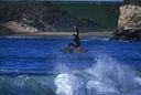 Title: Homer Fronstide Grab Surfer: Henard, Homer Type: Action