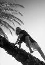 Title: Kaikea In Palm Surfer: Elias, Kaikea Type: Portraits