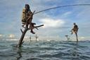 Title: Fishing Perch Location: Sri Lanka Photo Of: stock Type: Lifestyle