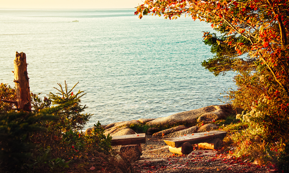 Fall foliage near the ocean in Maine's Acadia National Park.