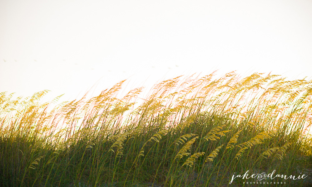 The dunes at Tybee Island beach in Savannah. The sun shines through the grass as sunset approaches