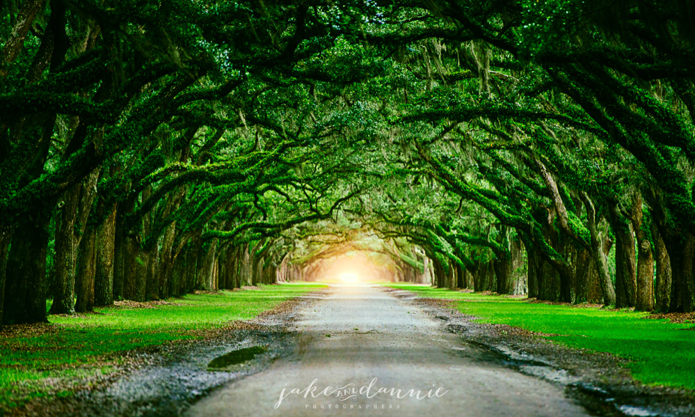 Headlights at the end of a tunnel of live oaks at Wormsloe Historic Site in Savannah Georgia. In this photo an incoming storm made everything dark
