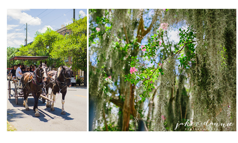 A horse drawn carriage in the streets of savannah and flowers blossoming through spanish moss
