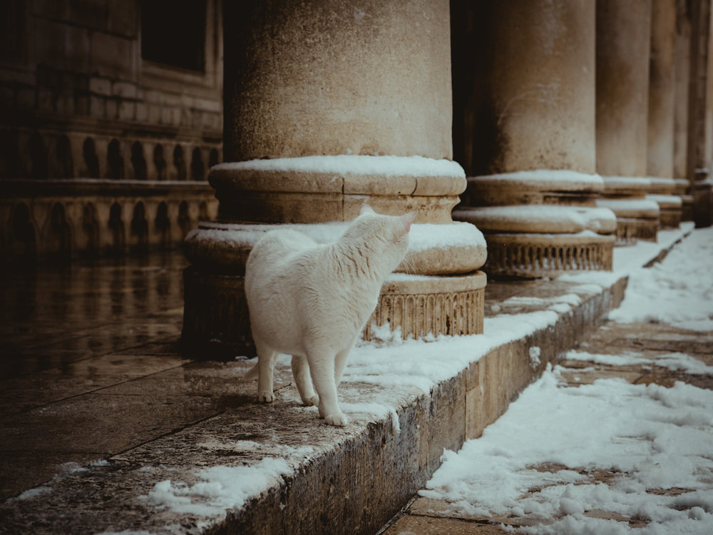 A cat plays in the snow in Dubrovnik, Croatia in Winter.