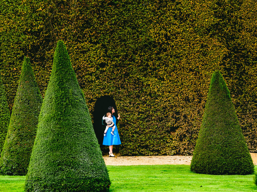 A gigantic hedge and some conical trees in the Versailles gardens.