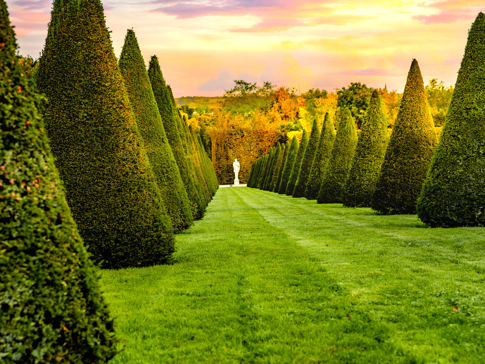 Rows of trees in the versailles gardens.