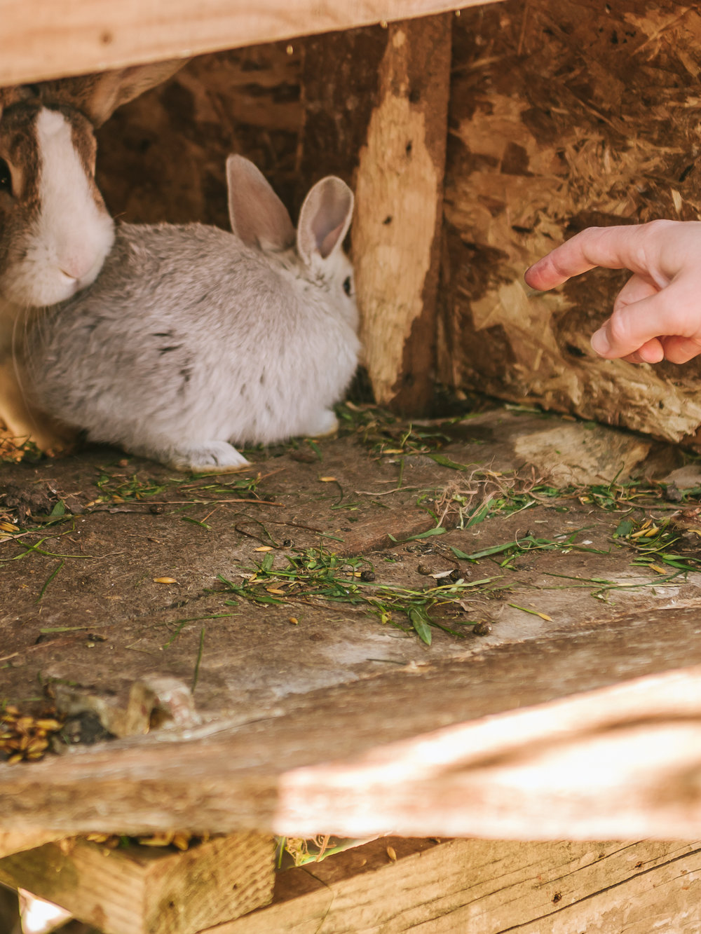 Some rabbits at the OK Corral Farmstay in Montenegro.