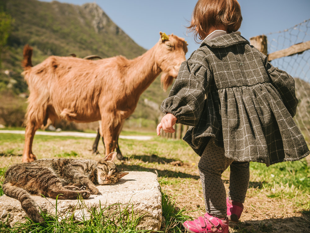 Family farmstay in Montenegro. Featuring goats, cats and other animals.